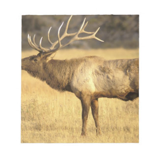 USA, Wyoming, Yellowstone National Park. Bull Note Pad