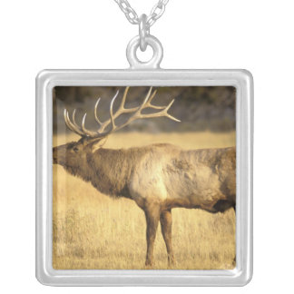 USA, Wyoming, Yellowstone National Park. Bull Square Pendant Necklace
