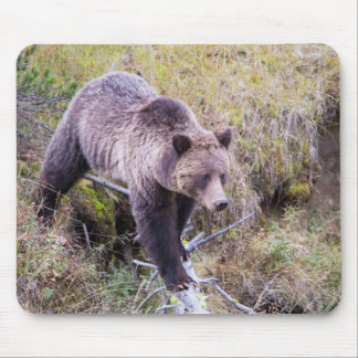 USA, Wyoming, Yellowstone National Park, Grizzly 1 Mouse Pad