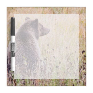 USA, Wyoming, Yellowstone National Park, Grizzly 2 Dry-Erase Board