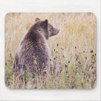 USA, Wyoming, Yellowstone National Park, Grizzly 2 Mouse Pad