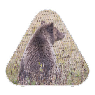 USA, Wyoming, Yellowstone National Park, Grizzly 2 Speaker
