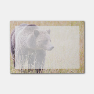 USA, Wyoming, Yellowstone National Park, Grizzly 3 Post-it Notes