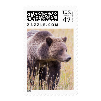 USA, Wyoming, Yellowstone National Park, Grizzly 3 Postage