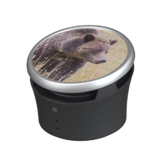 USA, Wyoming, Yellowstone National Park, Grizzly 3 Speaker
