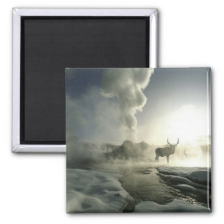 USA, Wyoming, Yellowstone National Park. Sunrise 2 Inch Square Magnet
