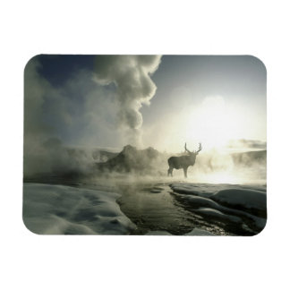 USA, Wyoming, Yellowstone National Park. Sunrise Rectangular Photo Magnet