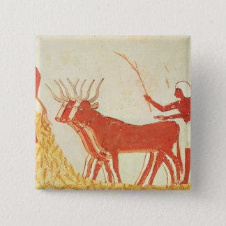Using cows to trample wheat pinback button