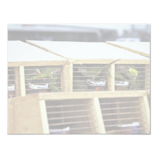 USInspection del envío del Parakeet del Quaker de Invitación 10,8 X 13,9 Cm