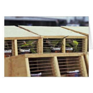 USInspection of Quaker Parakeet Shipment from Urug Card