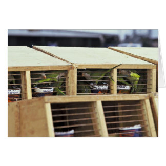 USInspection of Quaker Parakeet Shipment from Urug Greeting Cards