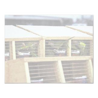 "USInspection of Quaker Parakeet Shipment from Urug 4.25"" X 5.5"" Invitation Card"