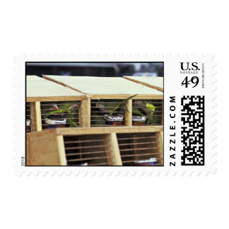 USInspection of Quaker Parakeet Shipment from Urug Postage Stamp
