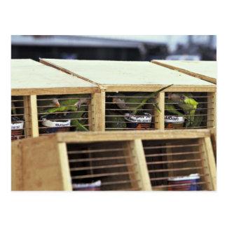 USInspection of Quaker Parakeet Shipment from Urug Postcards