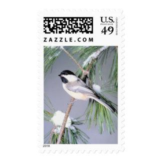 USPS Christmas Card Stamp 2014