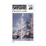 USPS Christmas Stamps 2014 Winter Photo