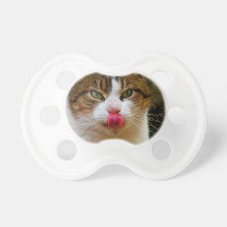 Usted es gato tan dulce y ama chupetes