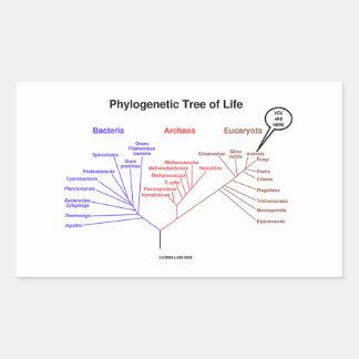 Usted está aquí árbol de la vida filogenético (la pegatina rectangular