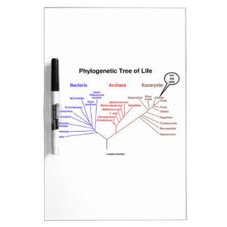 Usted está aquí árbol de la vida filogenético (la  pizarra blanca