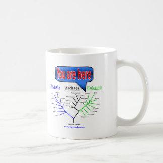 """Usted está aquí"" árbol evolutivo Taza"