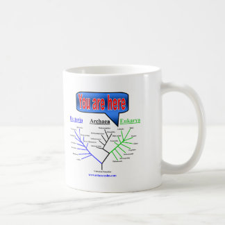 """Usted está aquí"" árbol evolutivo Taza Clásica"