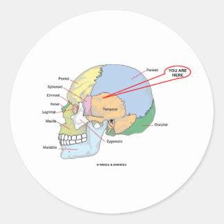 Usted está aquí la región temporal del cerebro an pegatina