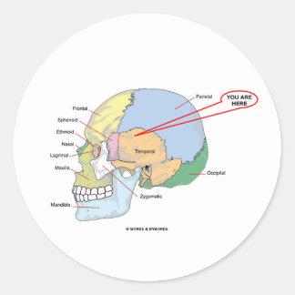 Usted está aquí la región temporal del cerebro an pegatina redonda