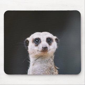 ¿Usted me está mirando?  Meerkat Mousepad Alfombrilla De Ratón