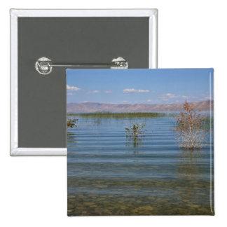UT, lago bear Pin Cuadrado