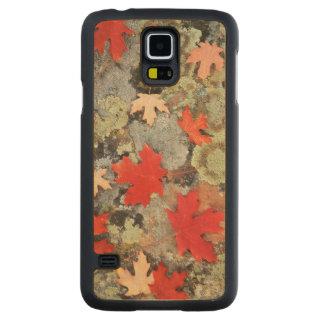 Utah, bosque del Estado de Fishlake. Modelos Funda De Galaxy S5 Slim Arce