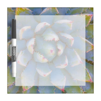 Utah, Dixie National Forest. Close-up of yucca Dry Erase Board