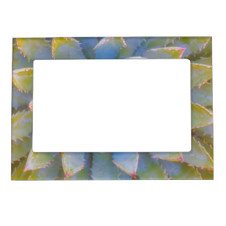 Utah, Dixie National Forest. Close-up of yucca Magnetic Frame