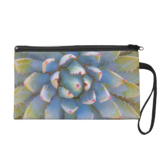 Utah, Dixie National Forest. Close-up of yucca Wristlet