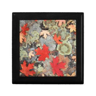 Utah, Fishlake National Forest. Patterns Gift Box