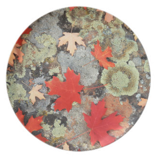 Utah, Fishlake National Forest. Patterns Melamine Plate