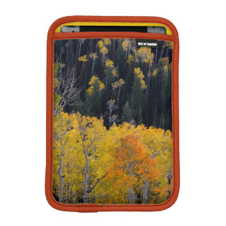 Utah. LOS E.E.U.U. Árboles de Aspen en otoño en el Fundas De iPad Mini