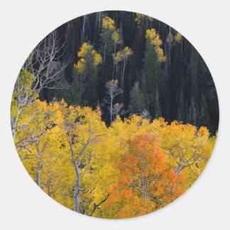 Utah. LOS E.E.U.U. Árboles de Aspen en otoño en el Pegatina Redonda
