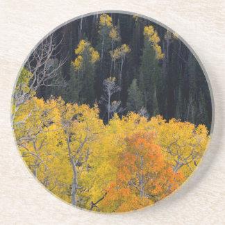 Utah. LOS E.E.U.U. Árboles de Aspen en otoño en el Posavasos Cerveza
