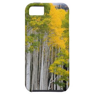 Utah. LOS E.E.U.U. Árboles de Aspen (Populus iPhone 5 Case-Mate Protectores