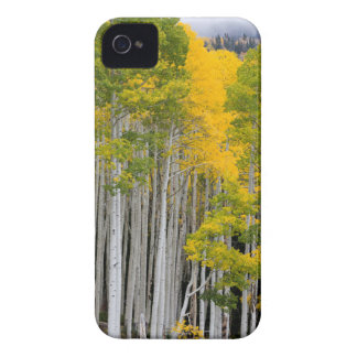Utah. LOS E.E.U.U. Árboles de Aspen (Populus iPhone 4 Case-Mate Protectores