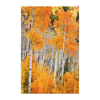 Utah, los E.E.U.U. Árboles de Aspen (Populus Impresión En Lienzo