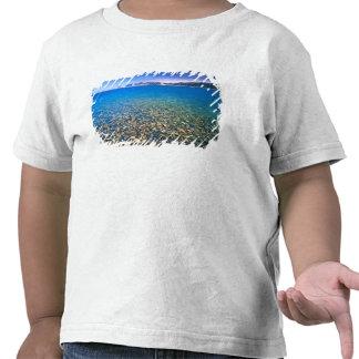 UTAH. LOS E.E.U.U. El agua clara del lago bear Camiseta