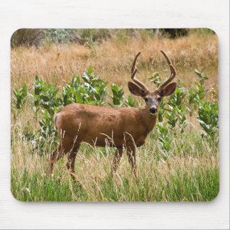 Utah Mule Deer Mouse Pad