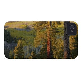 UTAH. Ponderosa pines & aspen, autumn. Sunrise, iPhone 4 Case