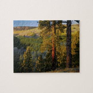 UTAH. Ponderosa pines & aspen, autumn. Sunrise, Jigsaw Puzzle