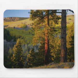 UTAH. Ponderosa pines & aspen, autumn. Sunrise, Mouse Pad