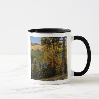 UTAH. Ponderosa pines & aspen, autumn. Sunrise, Mug