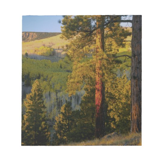 UTAH. Ponderosa pines & aspen, autumn. Sunrise, Notepad