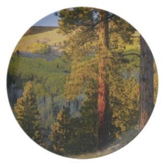 UTAH. Ponderosa pines & aspen, autumn. Sunrise, Plate