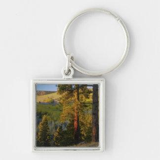 UTAH. Ponderosa pines & aspen, autumn. Sunrise, Silver-Colored Square Keychain